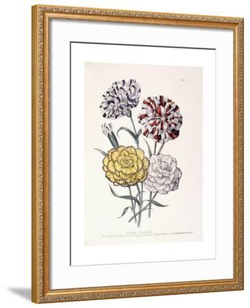 A Variety of Carnations-Jane W^ Loudon-Framed Giclee Print