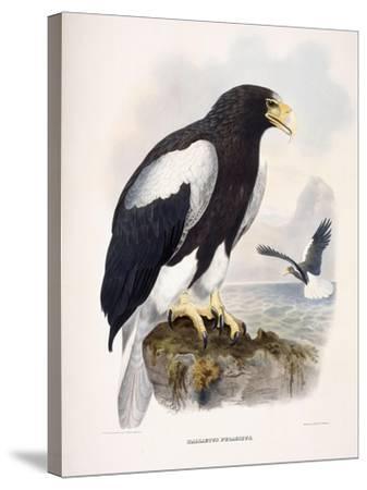 Haliaetus Pelagicus-Daniel Girard Elliot-Stretched Canvas Print