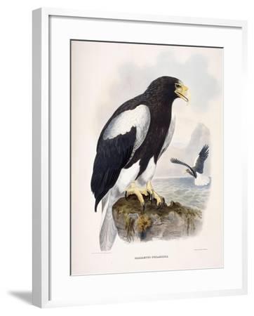 Haliaetus Pelagicus-Daniel Girard Elliot-Framed Giclee Print