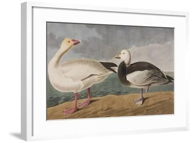 Illustration from 'Birds of America', 1827-38-John James Audubon-Framed Giclee Print