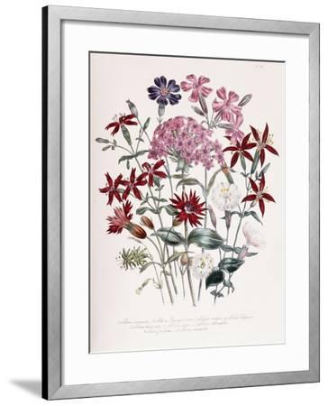 Catchfly-Jane W^ Loudon-Framed Giclee Print