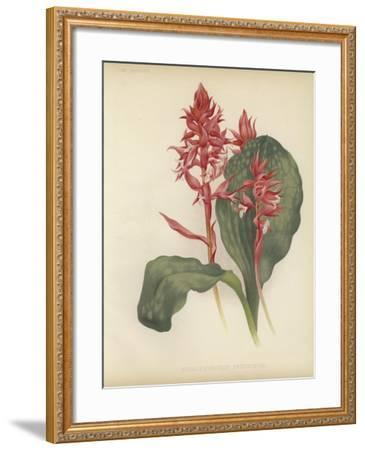 The Outstanding Stenorrhynchos--Framed Giclee Print