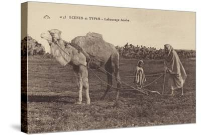 Scenes and Types - Arabic Ploughing--Stretched Canvas Print