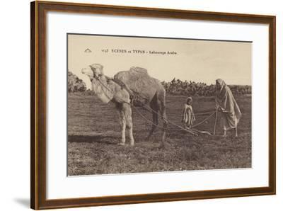Scenes and Types - Arabic Ploughing--Framed Photographic Print