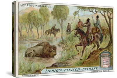 Hunting Bison in a Swamp--Stretched Canvas Print