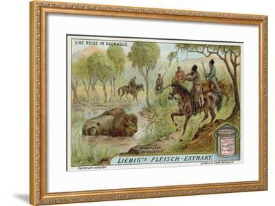 Hunting Bison in a Swamp--Framed Giclee Print