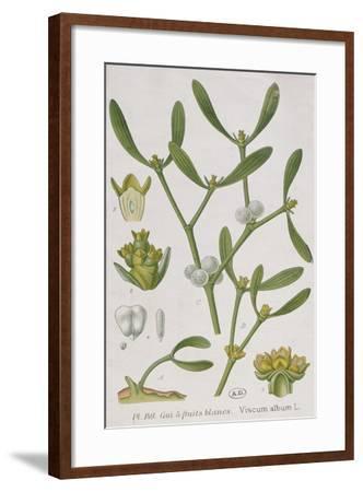 Mistletoe--Framed Giclee Print