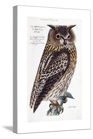 Owl, 1733-1763--Stretched Canvas Print