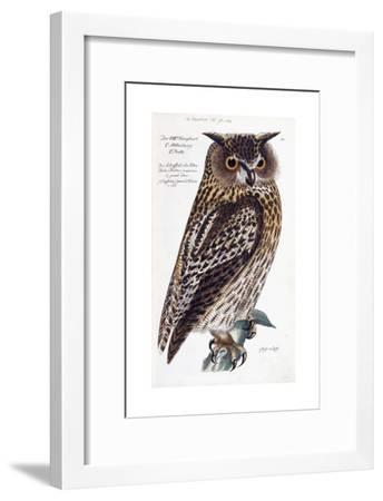Owl, 1733-1763--Framed Giclee Print