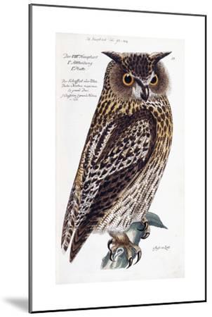 Owl, 1733-1763--Mounted Giclee Print
