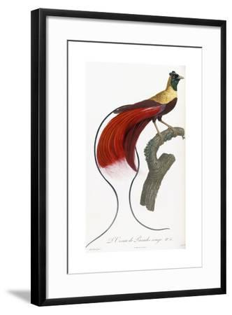 Red Bird of Paradise-Jacques Barraband-Framed Giclee Print