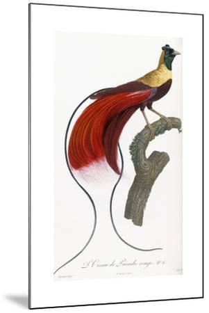 Red Bird of Paradise-Jacques Barraband-Mounted Giclee Print