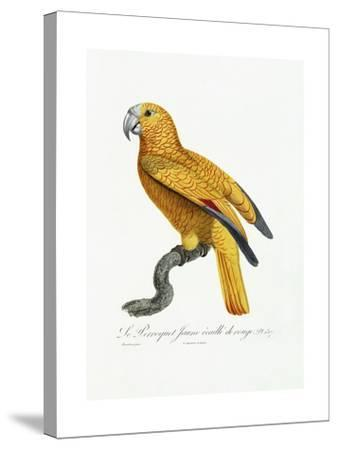 Yellow and Red Parrot, C.1801-05-Jacques Barraband-Stretched Canvas Print