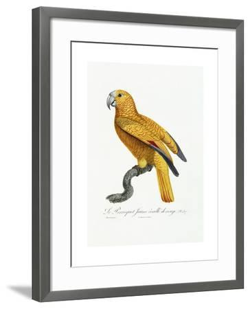Yellow and Red Parrot, C.1801-05-Jacques Barraband-Framed Giclee Print