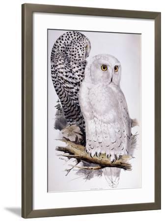 Snowy Owl, 1832-1837-Edward Lear-Framed Giclee Print
