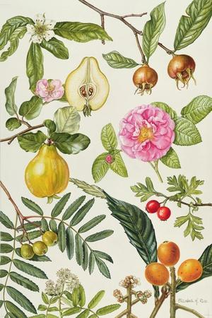 Quince and Other Fruit-Bearing Trees-Elizabeth Rice-Giclee Print