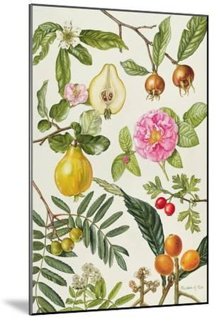 Quince and Other Fruit-Bearing Trees-Elizabeth Rice-Mounted Giclee Print