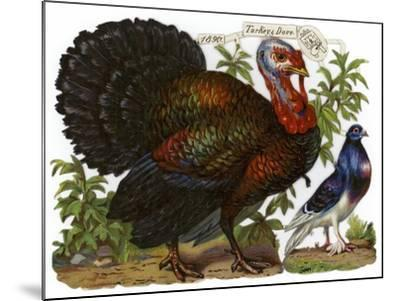 A Turkey Pictured Alongside a Dove--Mounted Giclee Print
