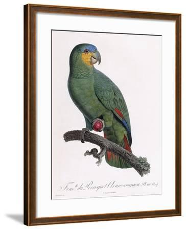 Female of the Douro-Couraou Parrot-Jacques Barraband-Framed Giclee Print
