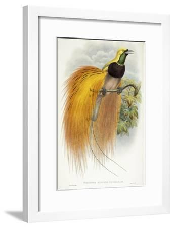 Paradisea Augustae Victoriae, 1891-1898-William Hart-Framed Giclee Print
