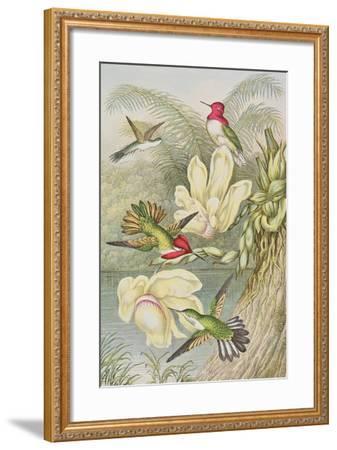 Humming Birds Among Tropical Flowers--Framed Giclee Print