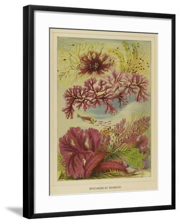Specimens of Seaweed--Framed Giclee Print