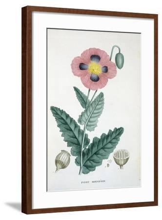 Opium-Poppy, 1805-1822--Framed Giclee Print