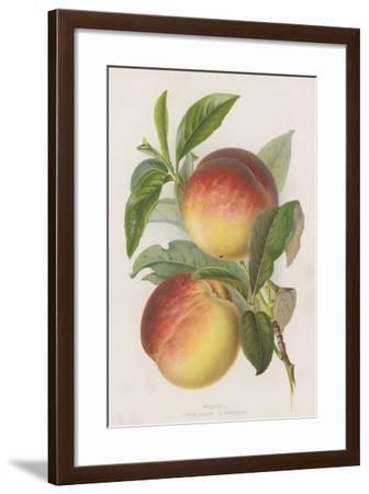 Peaches--Framed Giclee Print