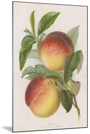 Peaches--Mounted Giclee Print