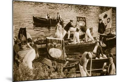 Swan Upping on the Thames--Mounted Photographic Print