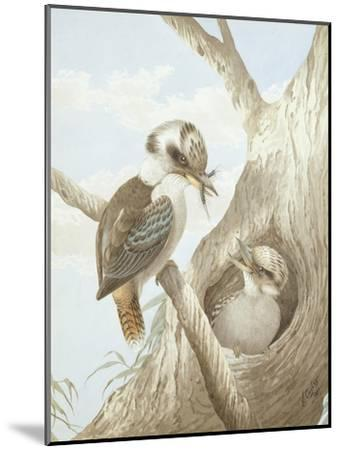 Kookaburras Feeding at a Nest in a Tree, 1892-Neville Henry Peniston Cayley-Mounted Giclee Print