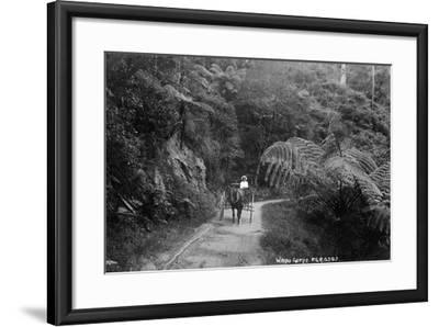 Waipu Gorge--Framed Photographic Print