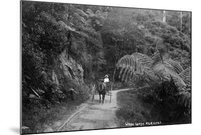 Waipu Gorge--Mounted Photographic Print