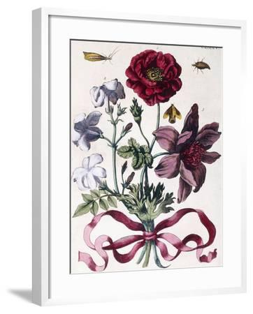 Various European Insects and Flowers-Maria Sibylla Graff Merian-Framed Giclee Print