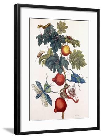 Metamorphosis of Various Insects, 1726-Pieter Sluiter Or Sluyter-Framed Giclee Print