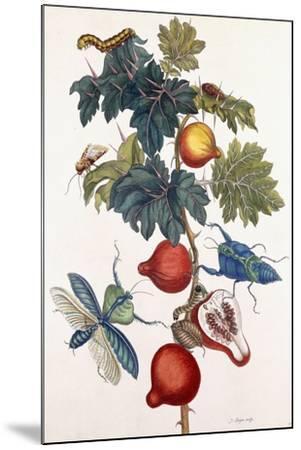 Metamorphosis of Various Insects, 1726-Pieter Sluiter Or Sluyter-Mounted Giclee Print