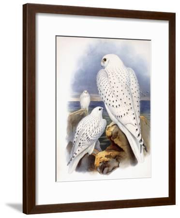 Illustration of Falcons, 1873-John Gould-Framed Giclee Print