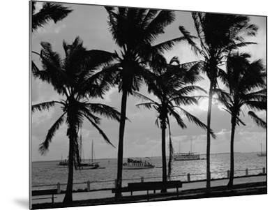 Sunset, Biscayne Bay, Miami, Florida, C.1910-20--Mounted Photographic Print