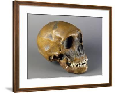 Skull of Homo Sapiens--Framed Giclee Print