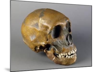 Skull of Homo Sapiens--Mounted Giclee Print