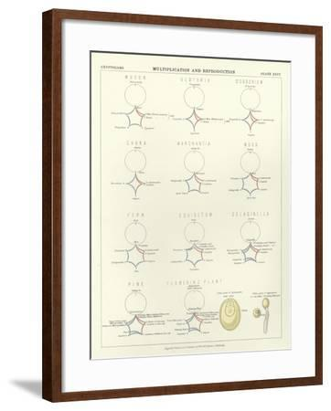 Multiplication and Reproduction--Framed Giclee Print