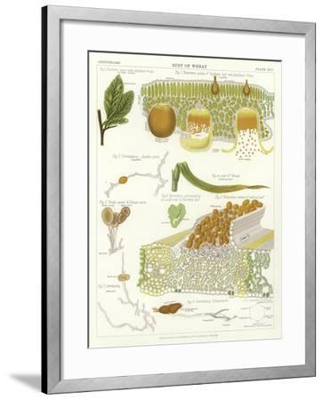 Rust of Wheat--Framed Giclee Print