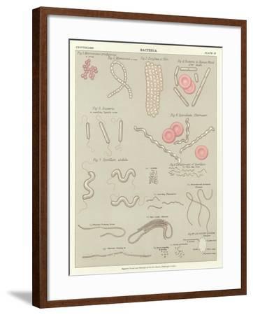 Bacteria--Framed Giclee Print