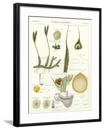 Lycopod and Selaginella--Framed Giclee Print