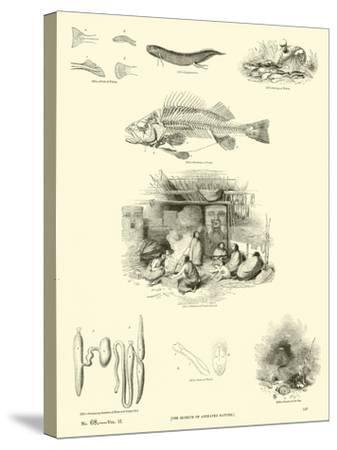 Page from the Pictorial Museum of Animated Nature--Stretched Canvas Print