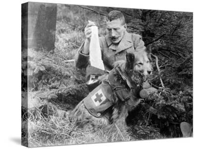 Red Cross Dog, C.1914-18--Stretched Canvas Print
