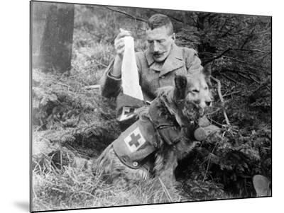 Red Cross Dog, C.1914-18--Mounted Photographic Print