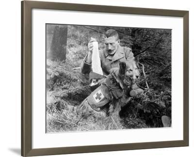 Red Cross Dog, C.1914-18--Framed Photographic Print
