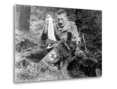 Red Cross Dog, C.1914-18--Metal Print