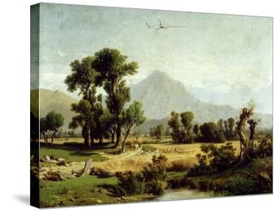 Crops-Andrea Marenzi-Stretched Canvas Print